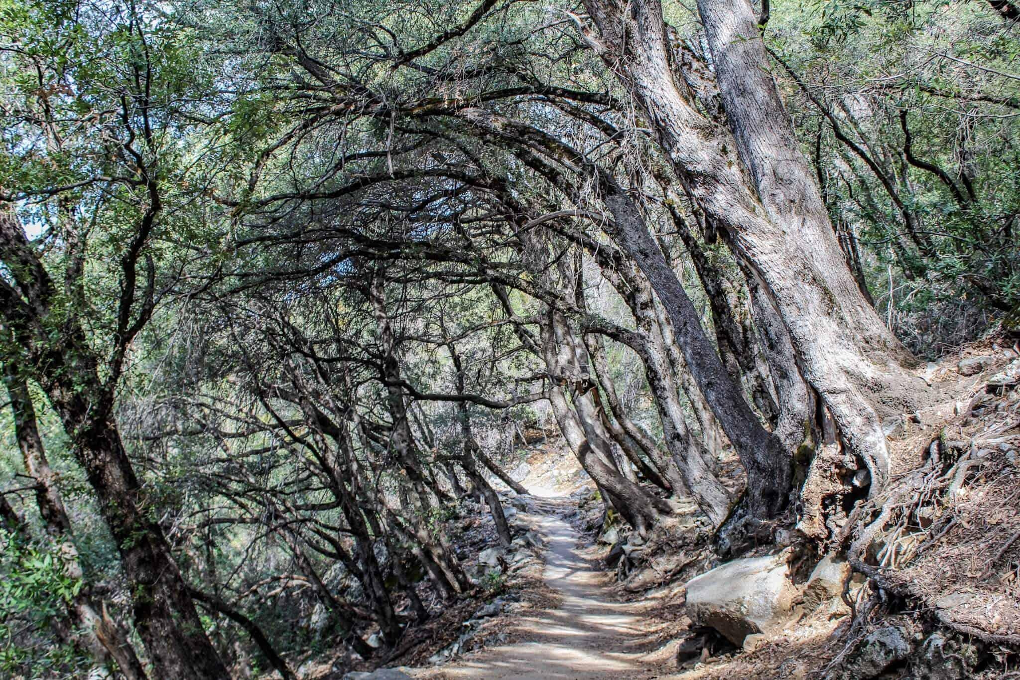 Yosemite Nationalpark 9