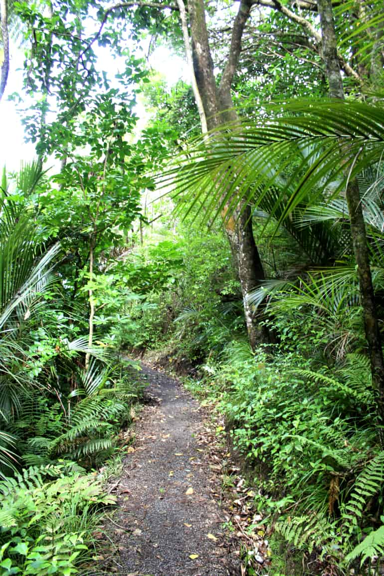 Goldie_Bush_Walkway