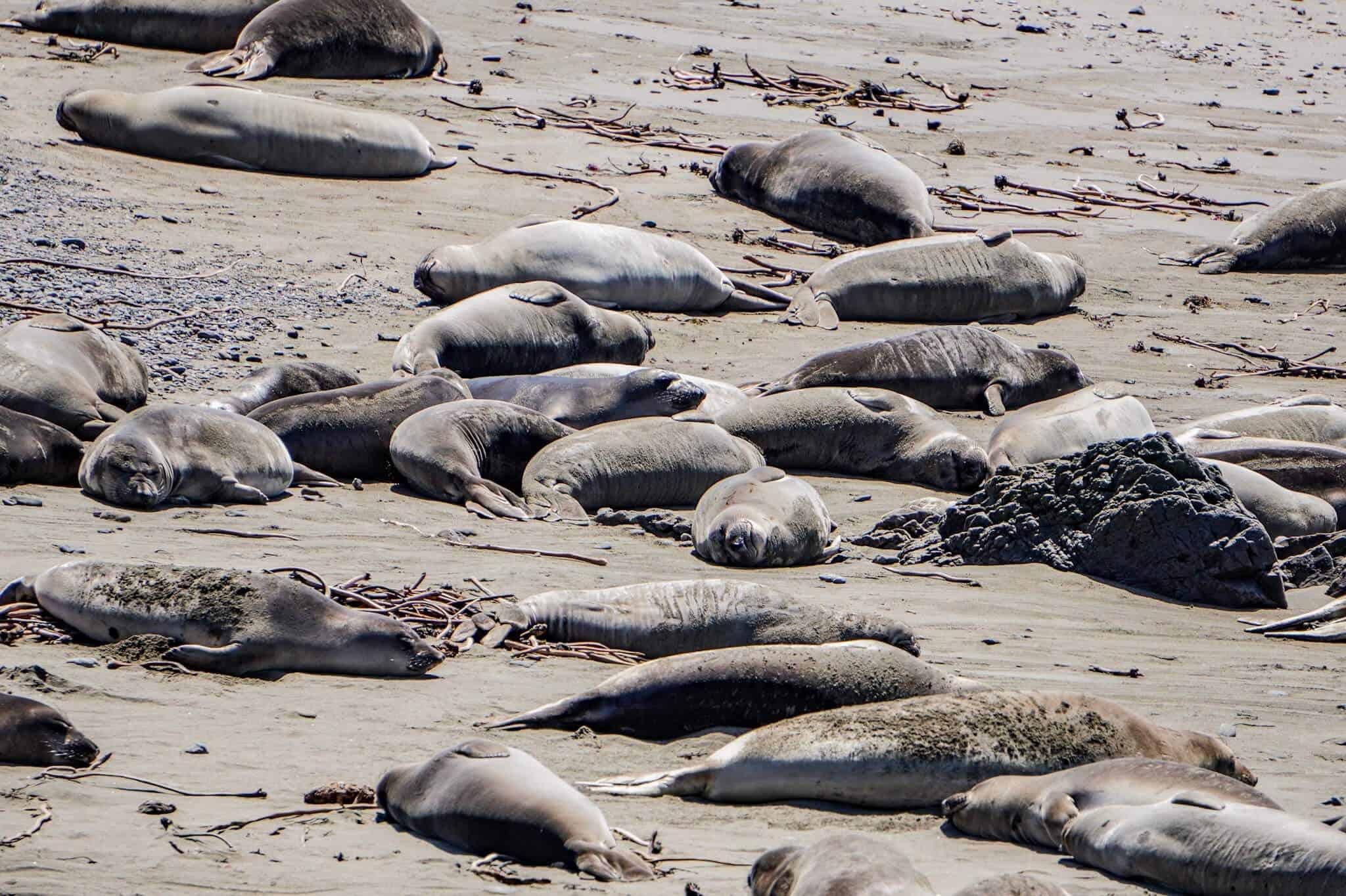 Seals Highway 1 2