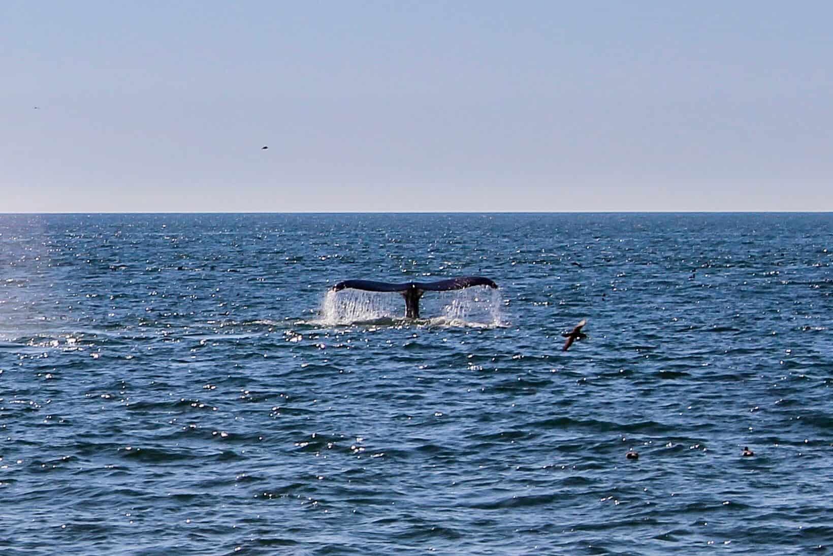 Whale Watching Monterrey