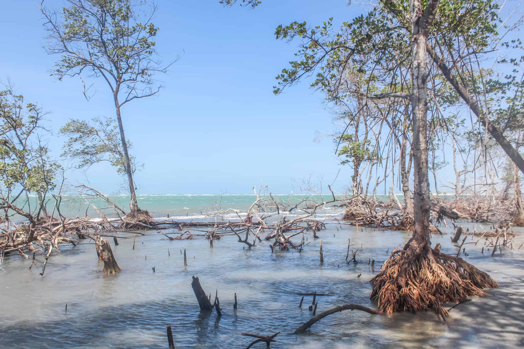 mangroven jericoacoara