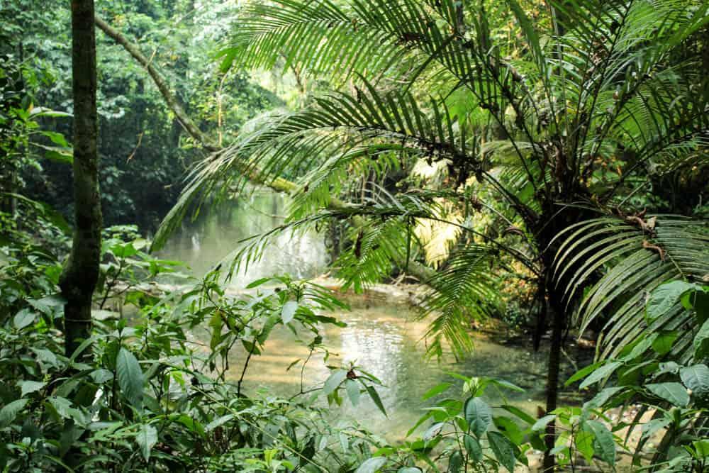 Idylle durch die Büsche Palenque