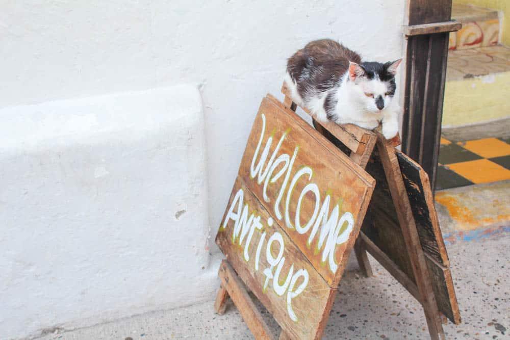 Chillende Katze Cartagena