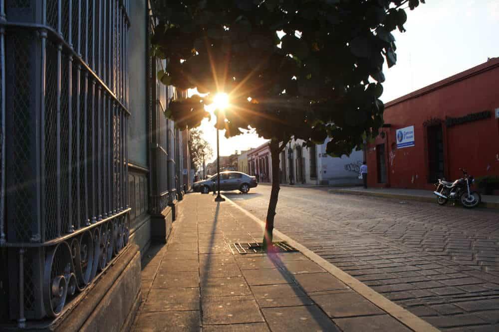 Sonnenuntergang in Oaxaca durch einen Baum