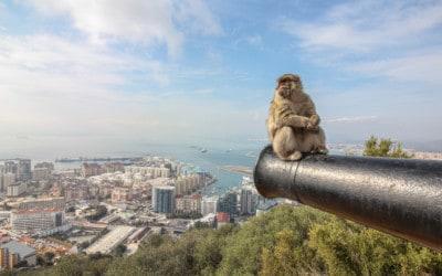 Gibraltar – Von dichtem Nebel, einem bekannten Felsen und Affen