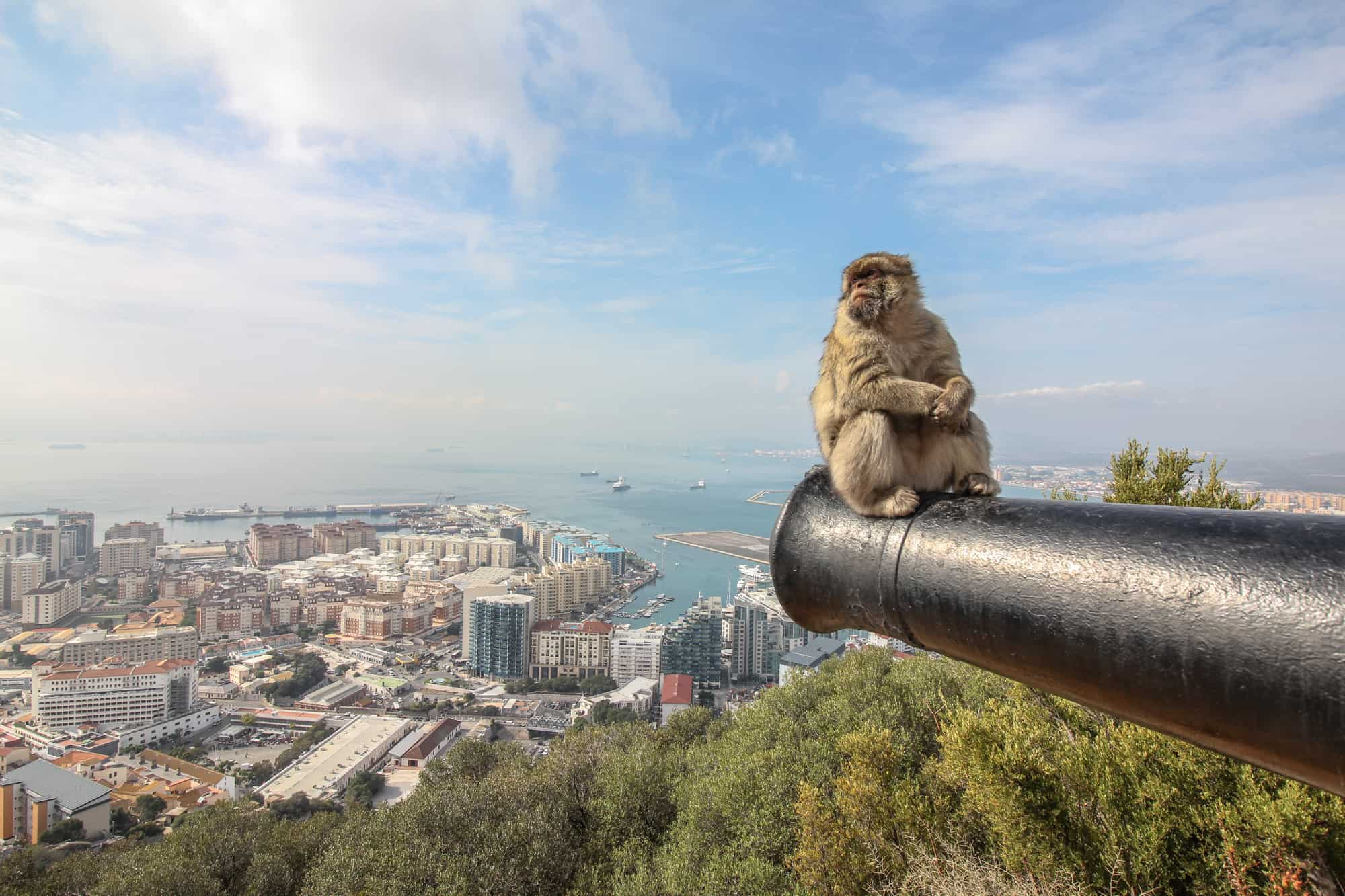 gibraltar about thick fog a known rock and monkeys