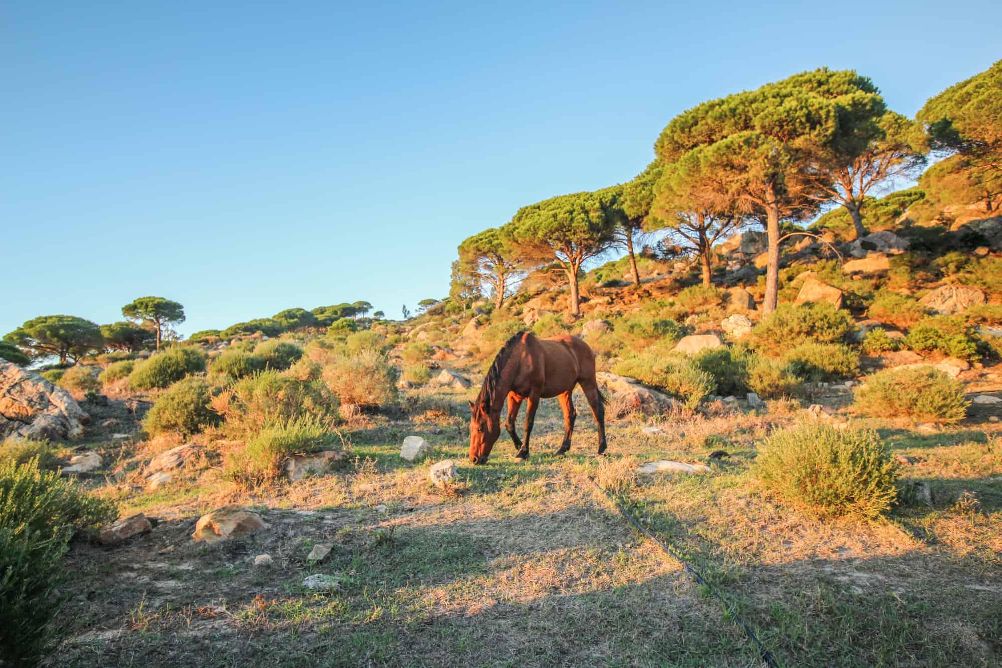 Pferd Wanderweg La Pena