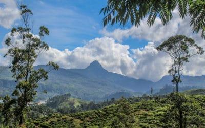 Adams Peak – Alles, was du über den Pilgerweg in Sri Lanka wissen musst!