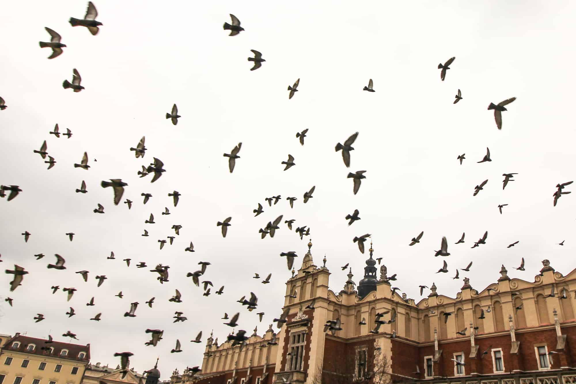 Tauben über dem Marktplatz von Krakau