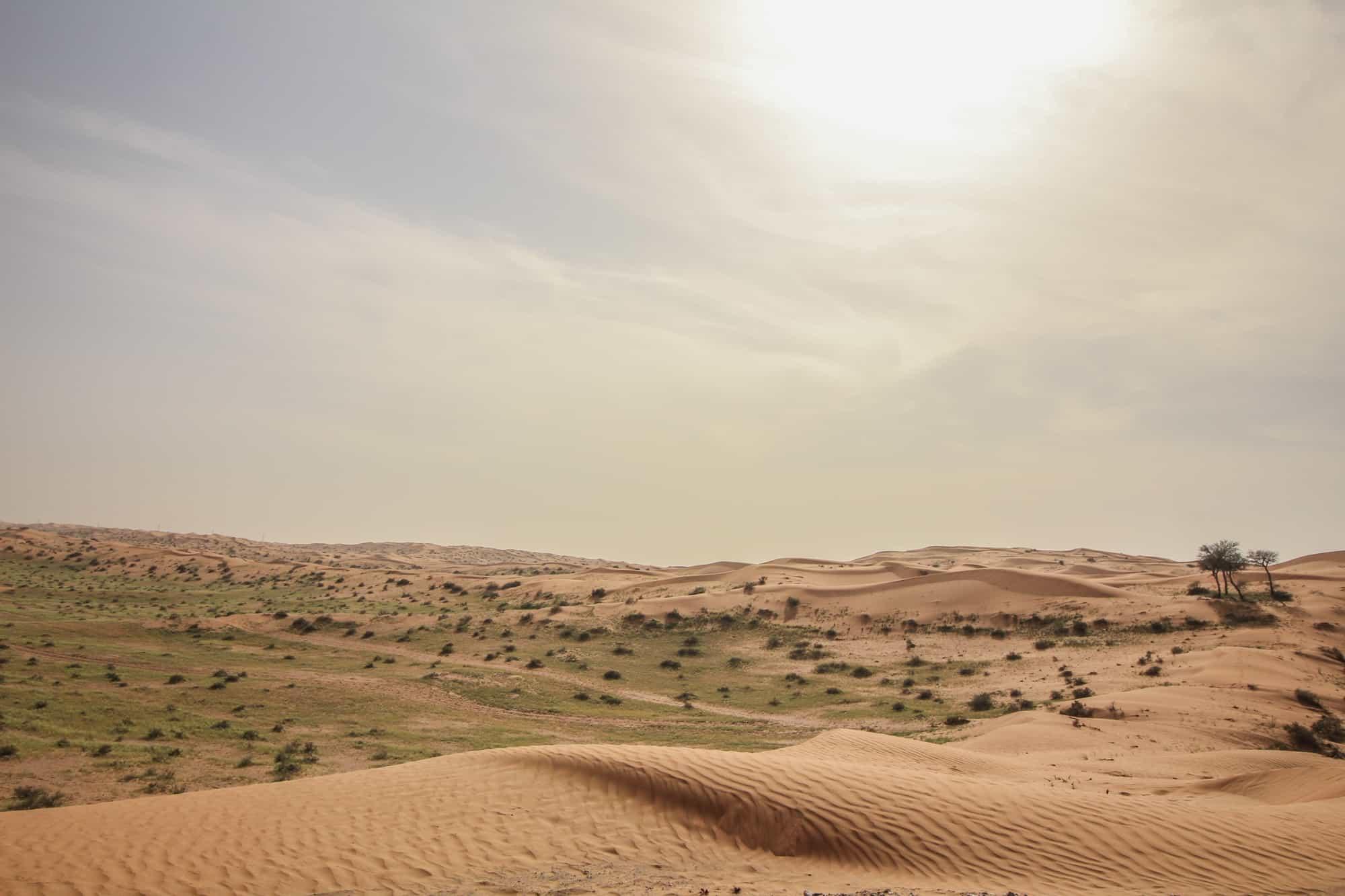 desert rak 2