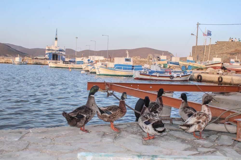 Enten im Hafen von Psara
