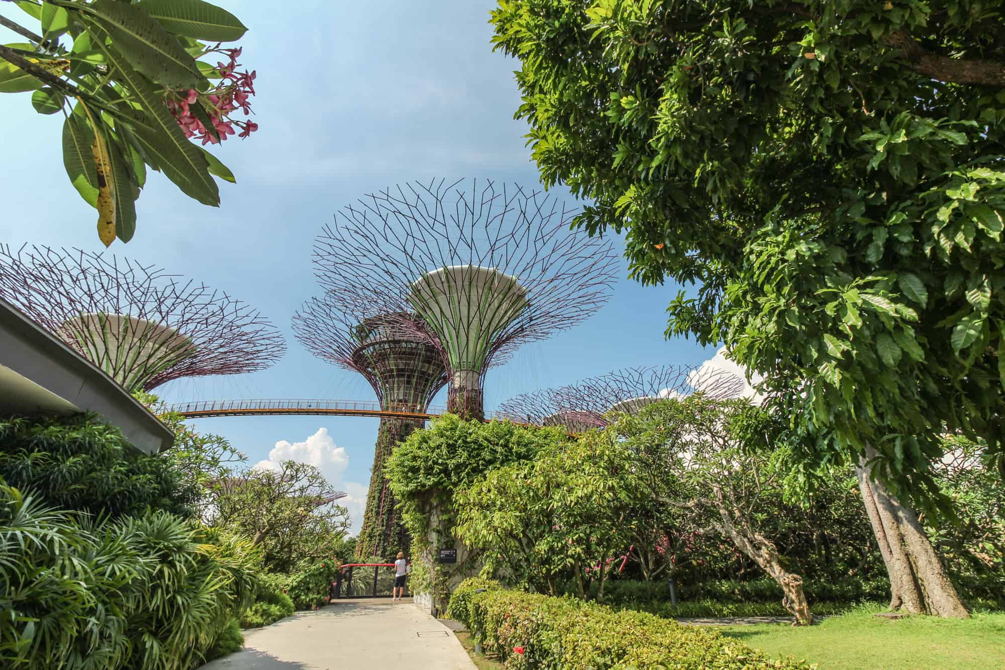 Gardens by the Bay – Super Trees – Super Tree Grove – SkyWalk