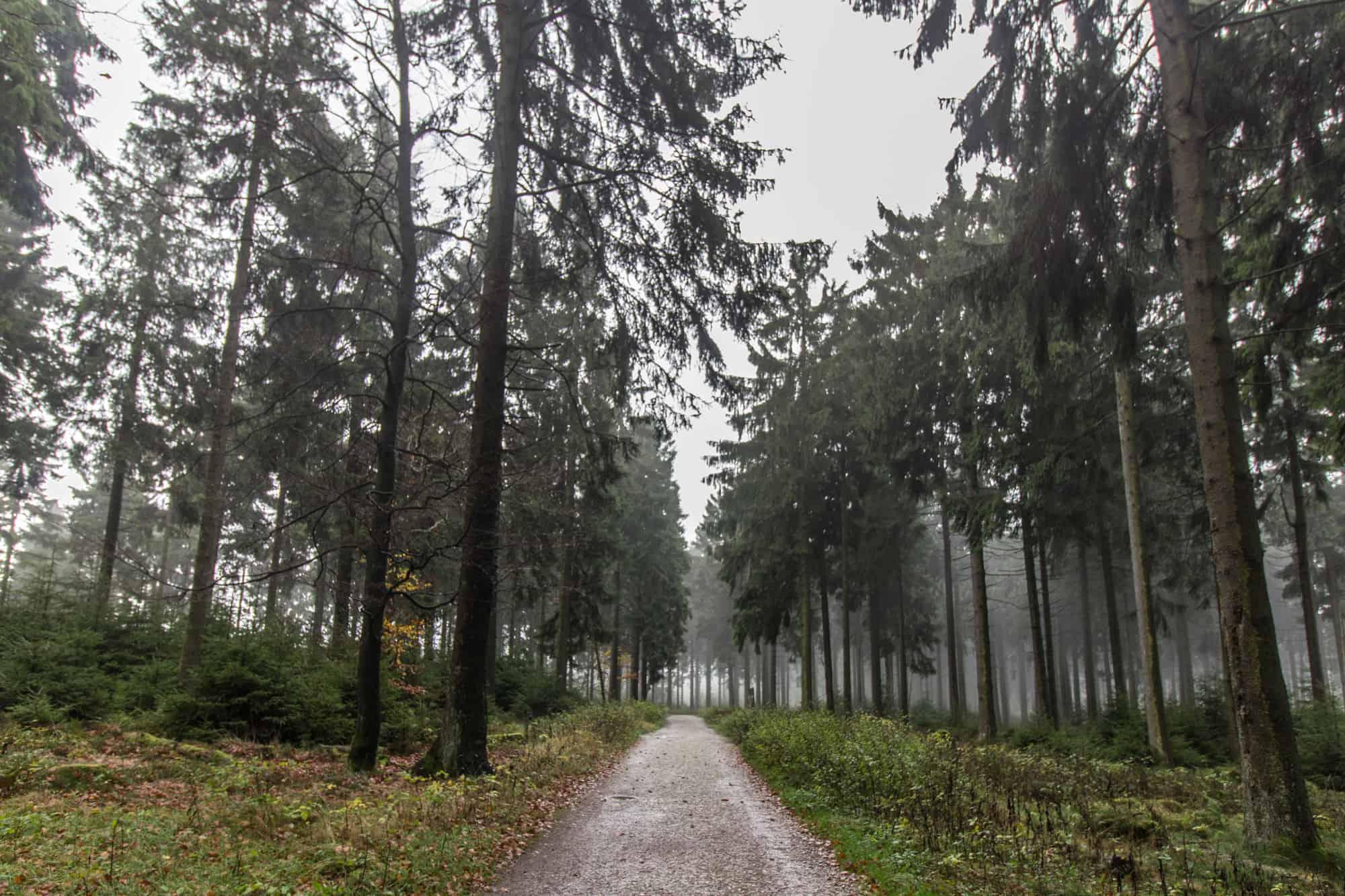 Ausflugsziele im Herbst im Rhein-Main-Gebiet –Feldberg