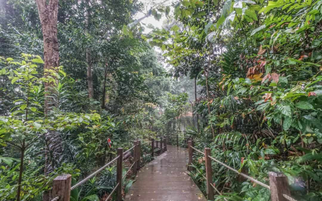 Bukit Timah Nature Reserve – A Primary Forest in the Heart of Singapore