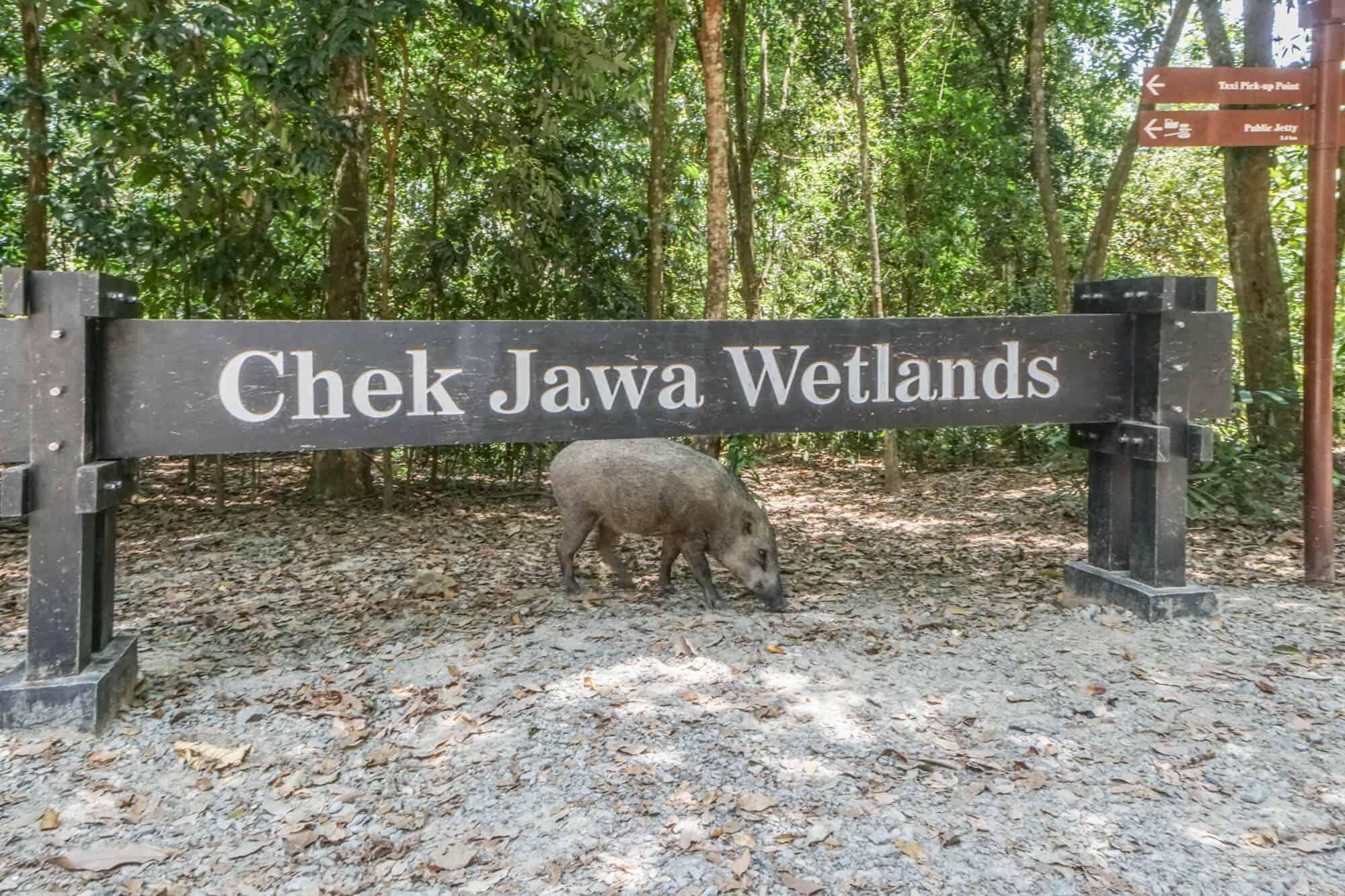 Pulau Ubin Chek Jawa Wetlands