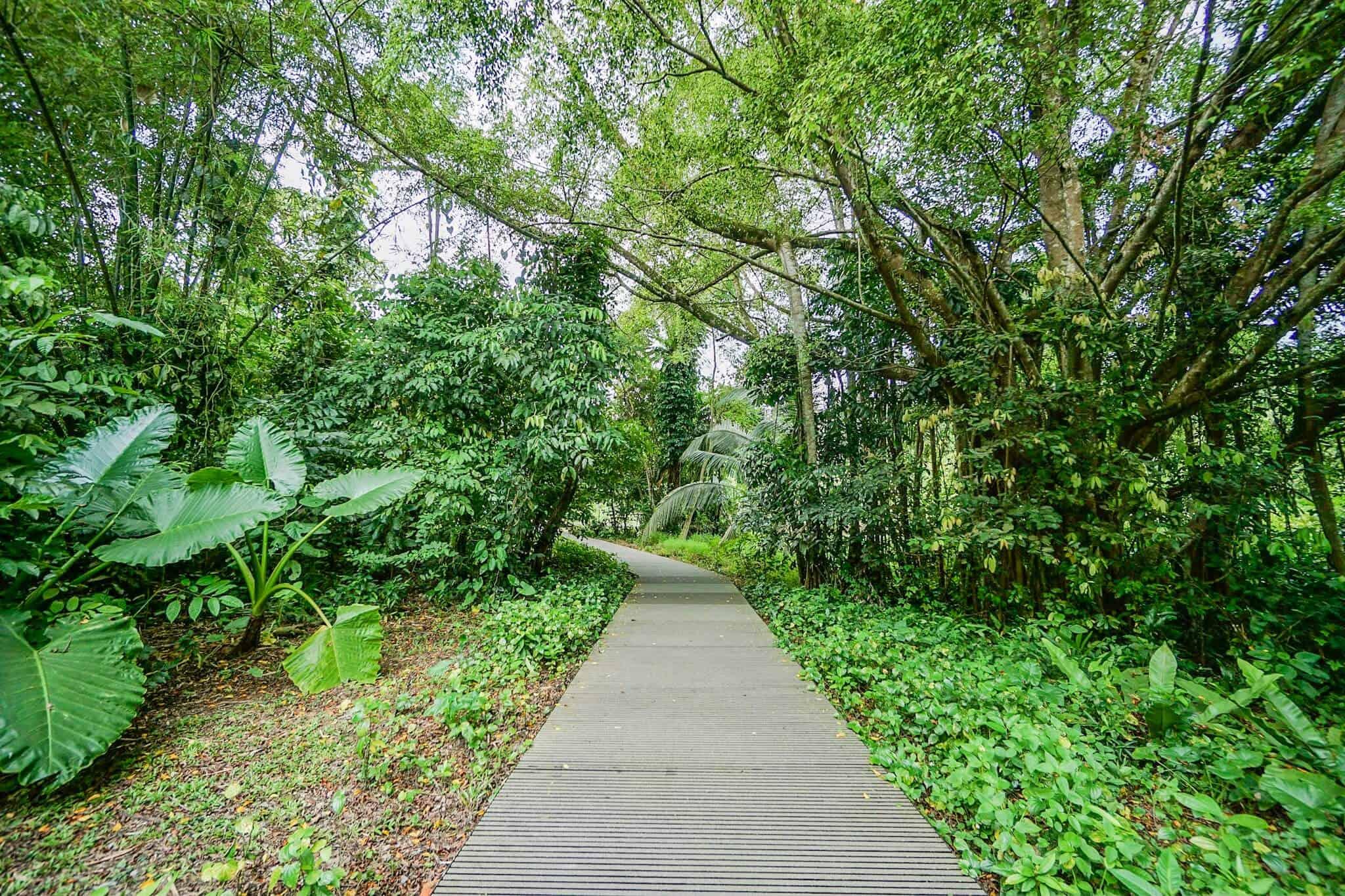 Hiking in Singapore – TreeTop Walk – MacRitchie Nature Trail
