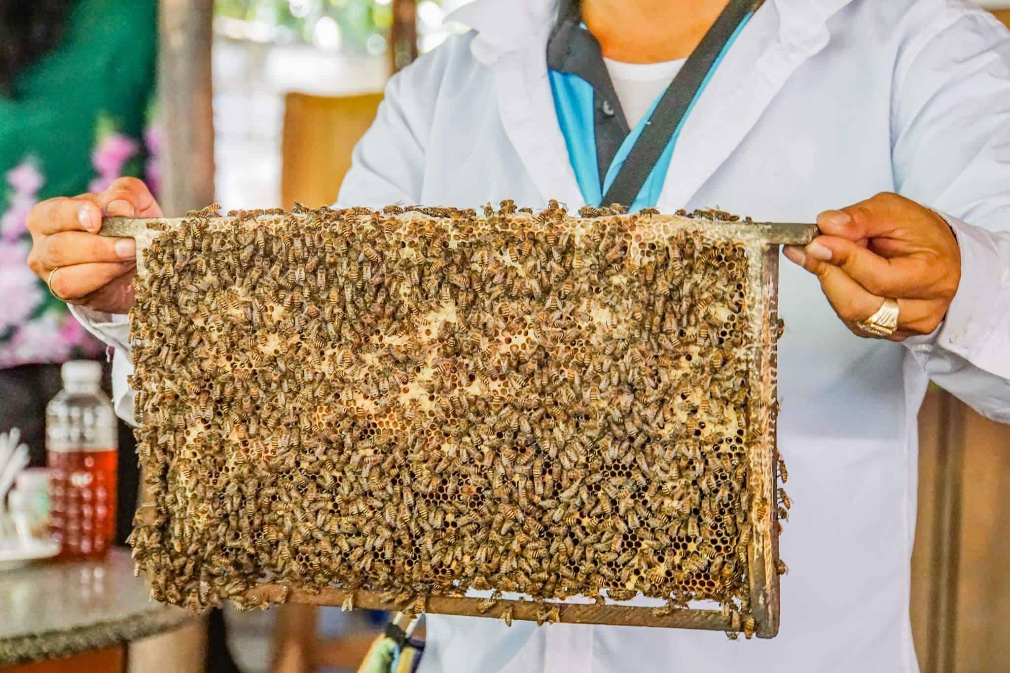 Mekong Delta Bees