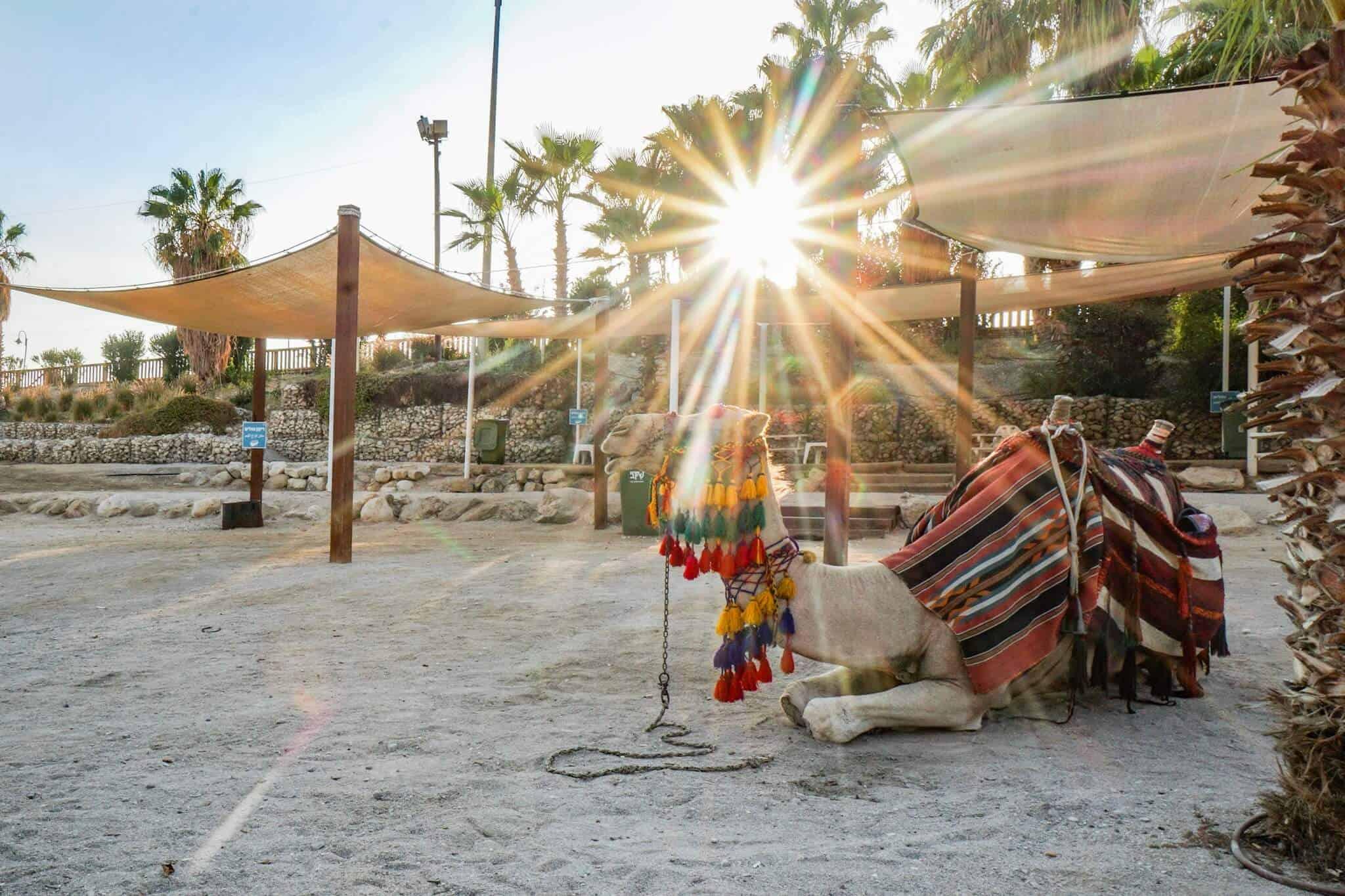 Totes Meer – Dead Sea