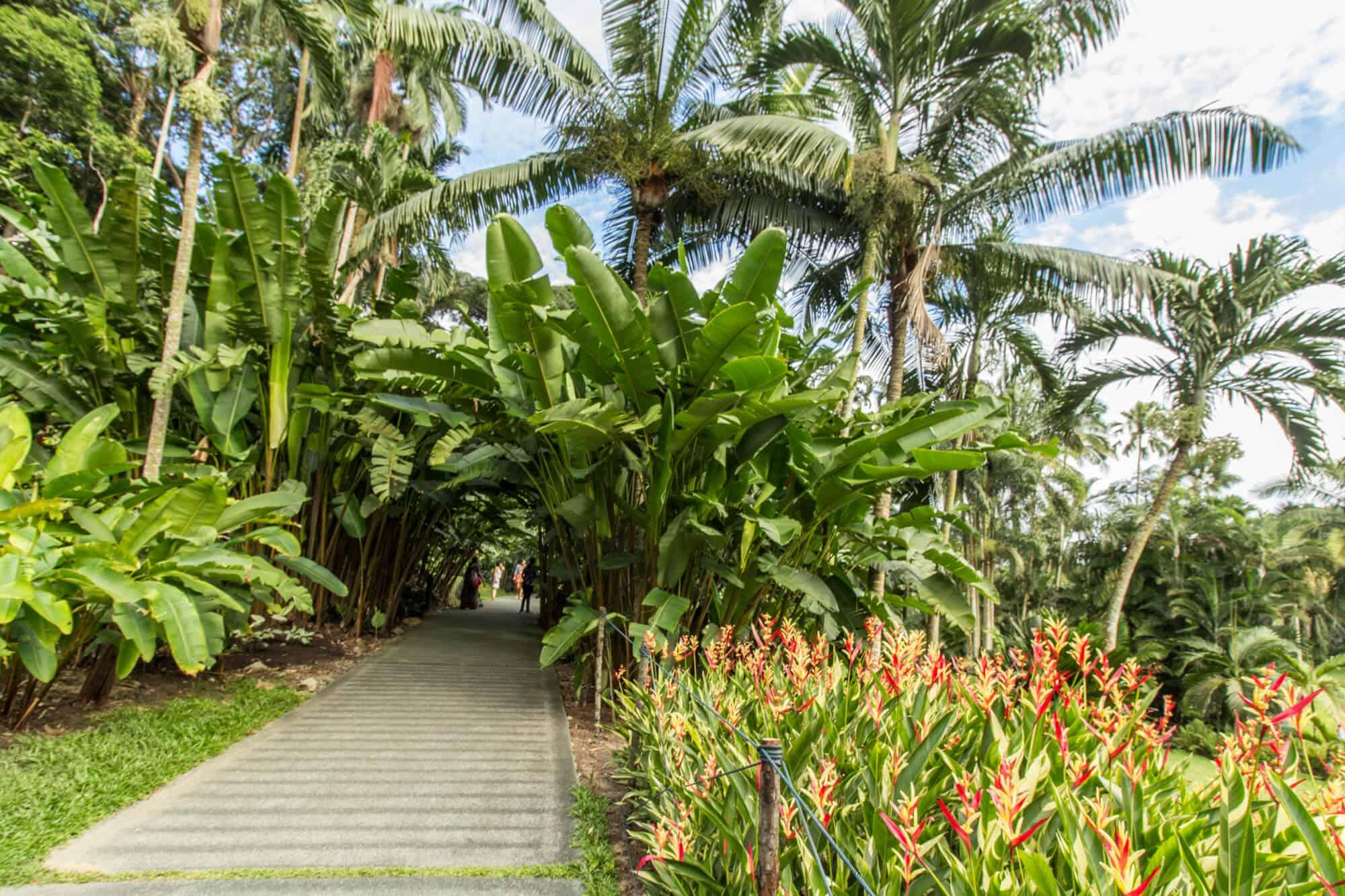 Singapur Botanischer Garten – Singapore Botanic Garden
