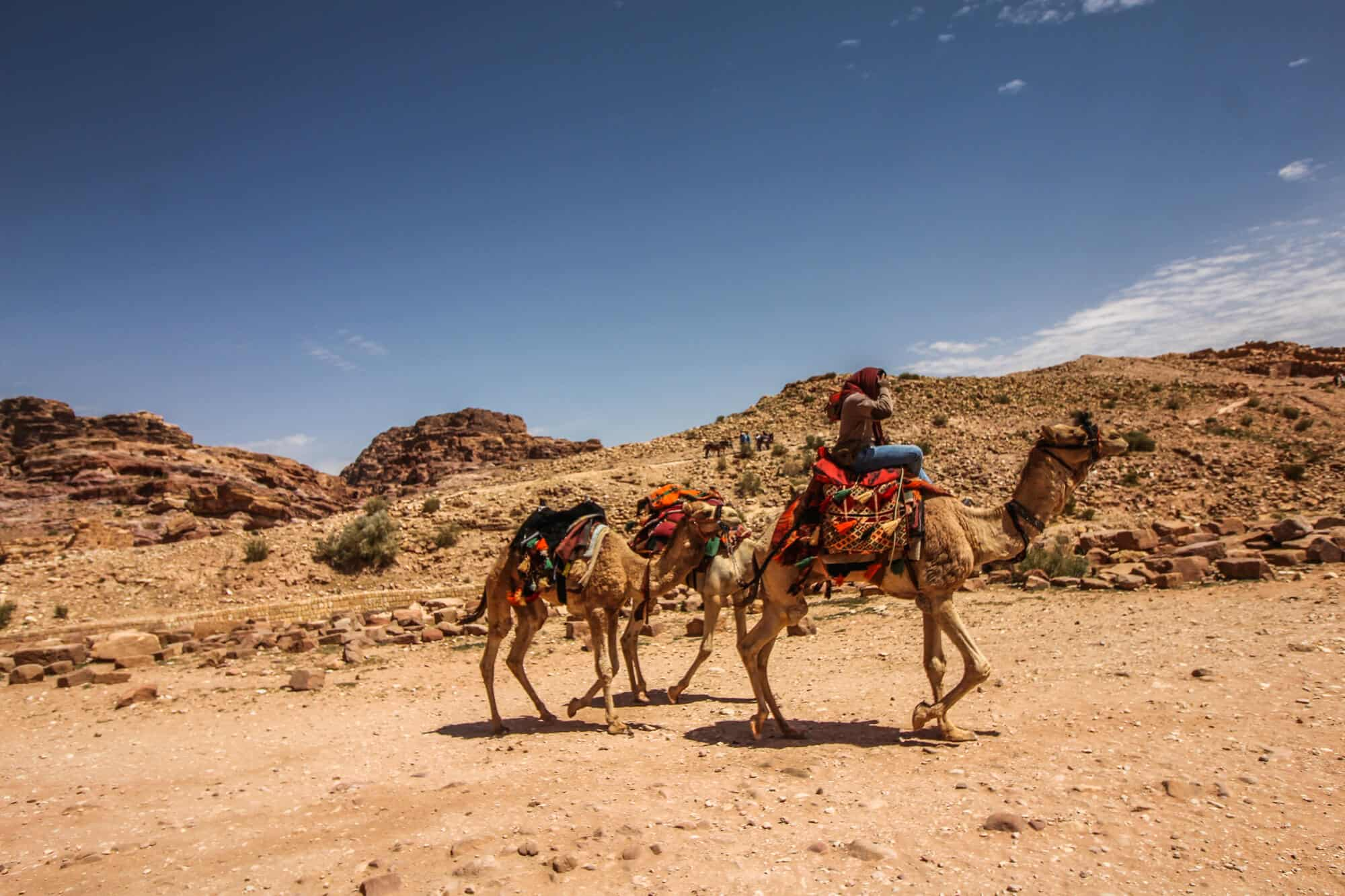 Kamele in Petra