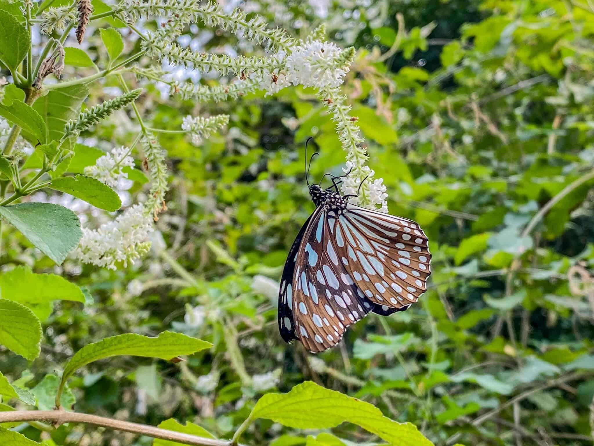 Butterfly Garden Wachirabenchathat Park