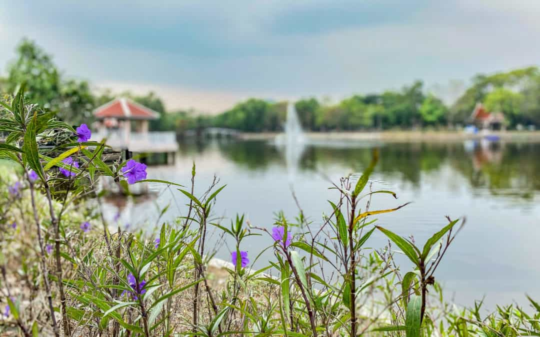Lumphini, Chatuchak & Co. – 5 Parks and Green Spots in Bangkok