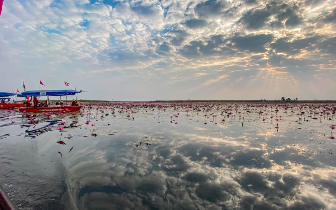 Red Lotus Lake – A trip to Thailand's most beautiful lake