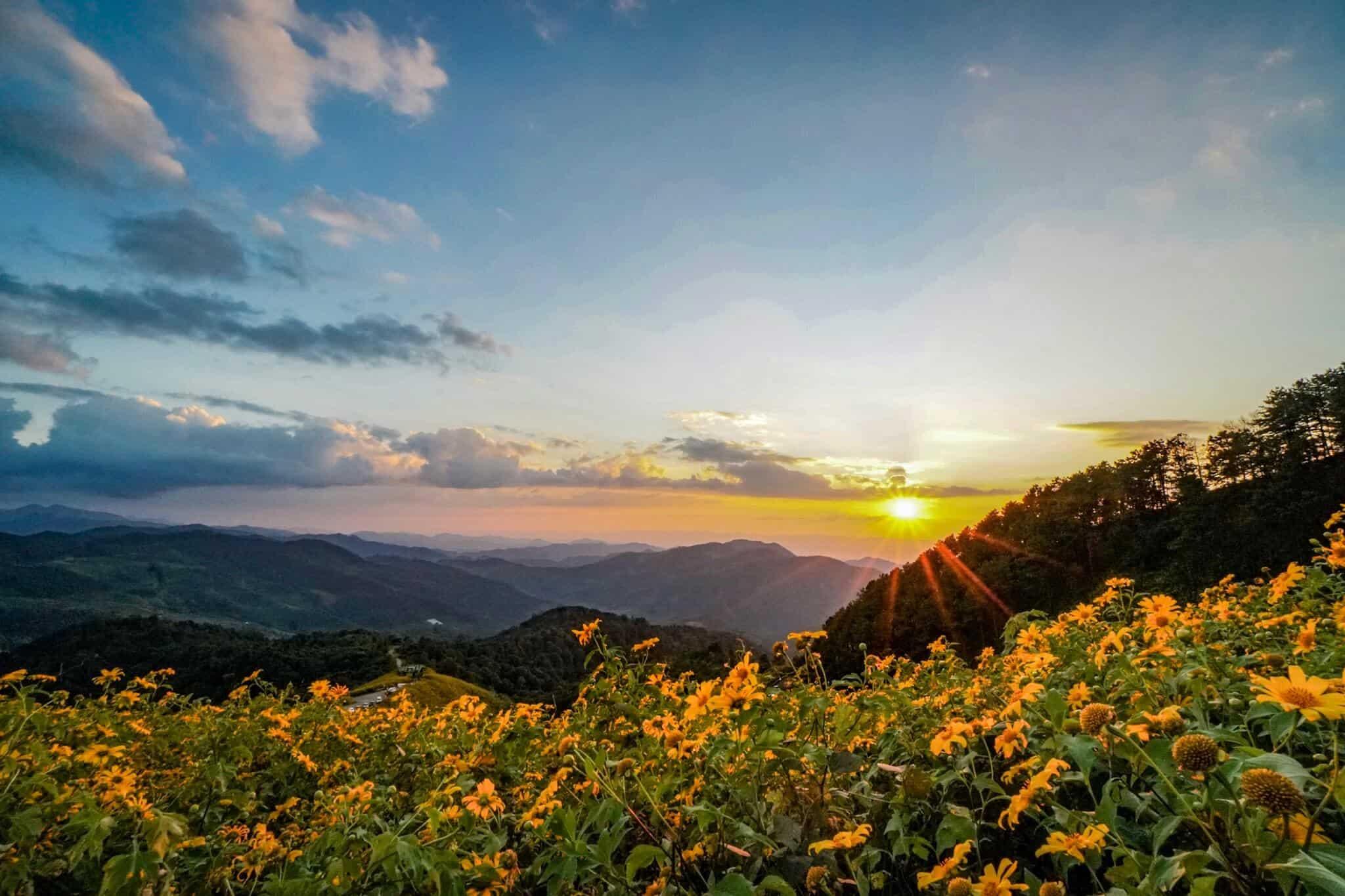 Sonnenblumen Mae Hong Son 2