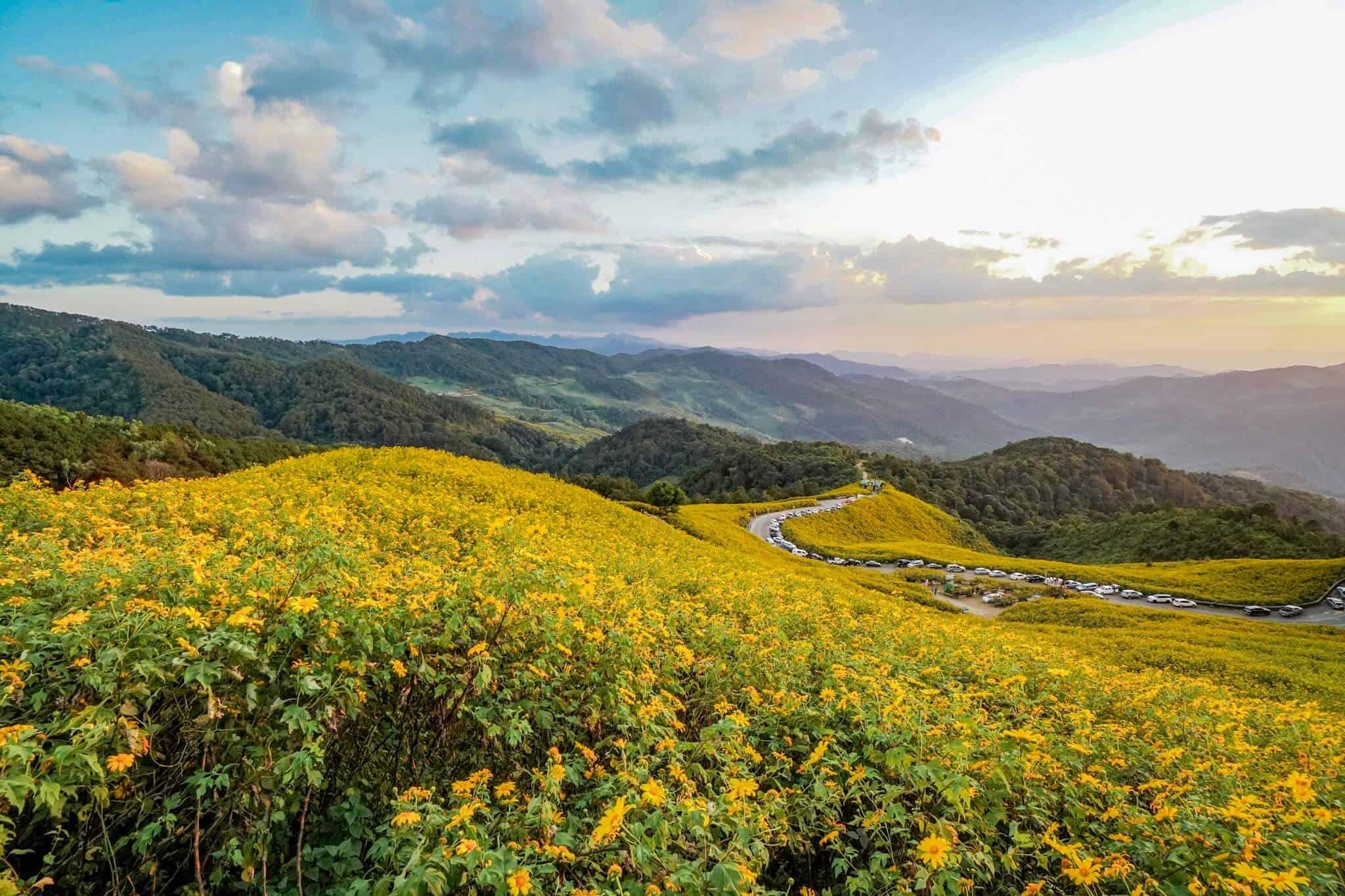 Die Sonnenblumen von Mae Hong Son