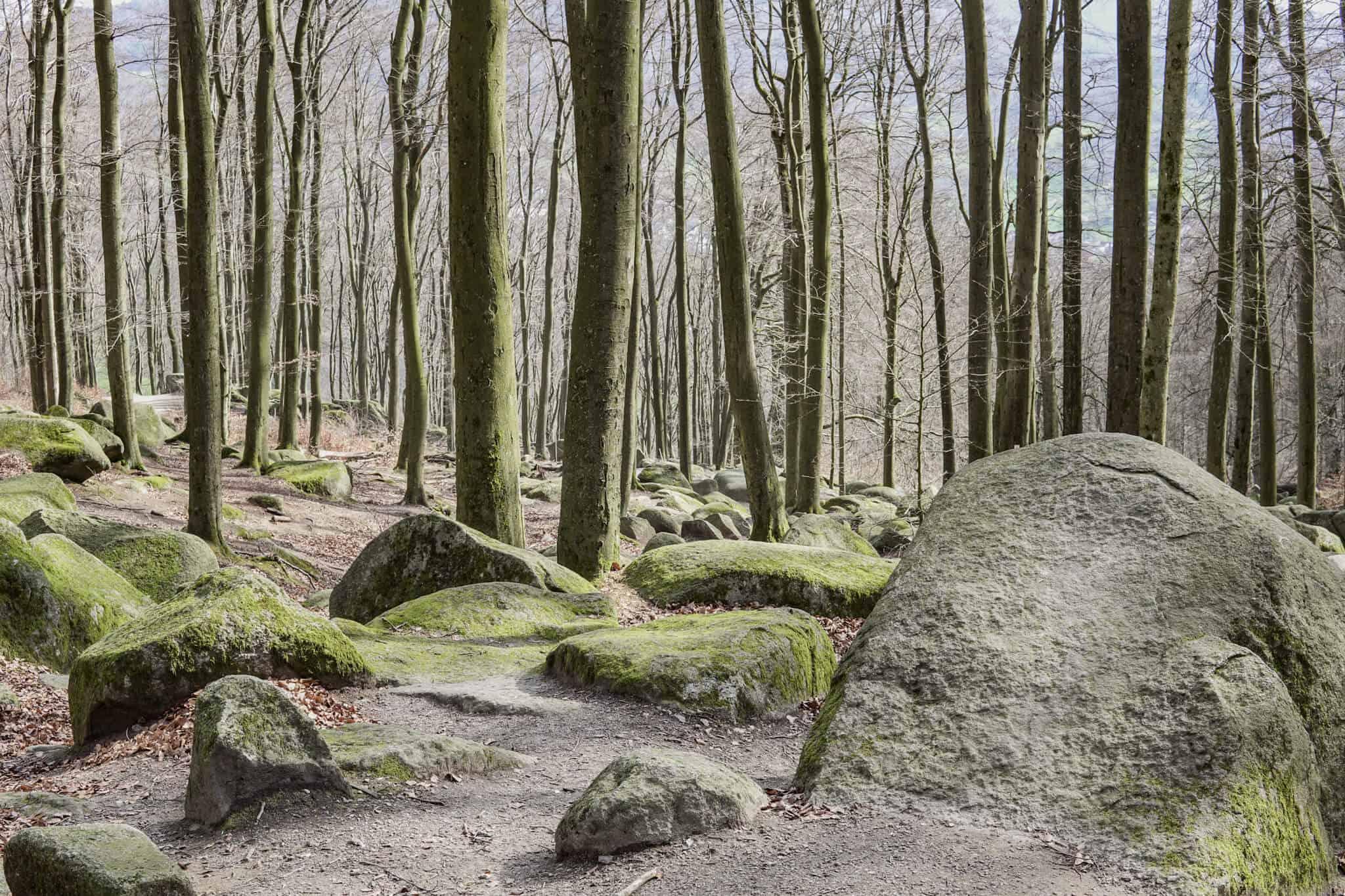 Steine im Felsenmeer
