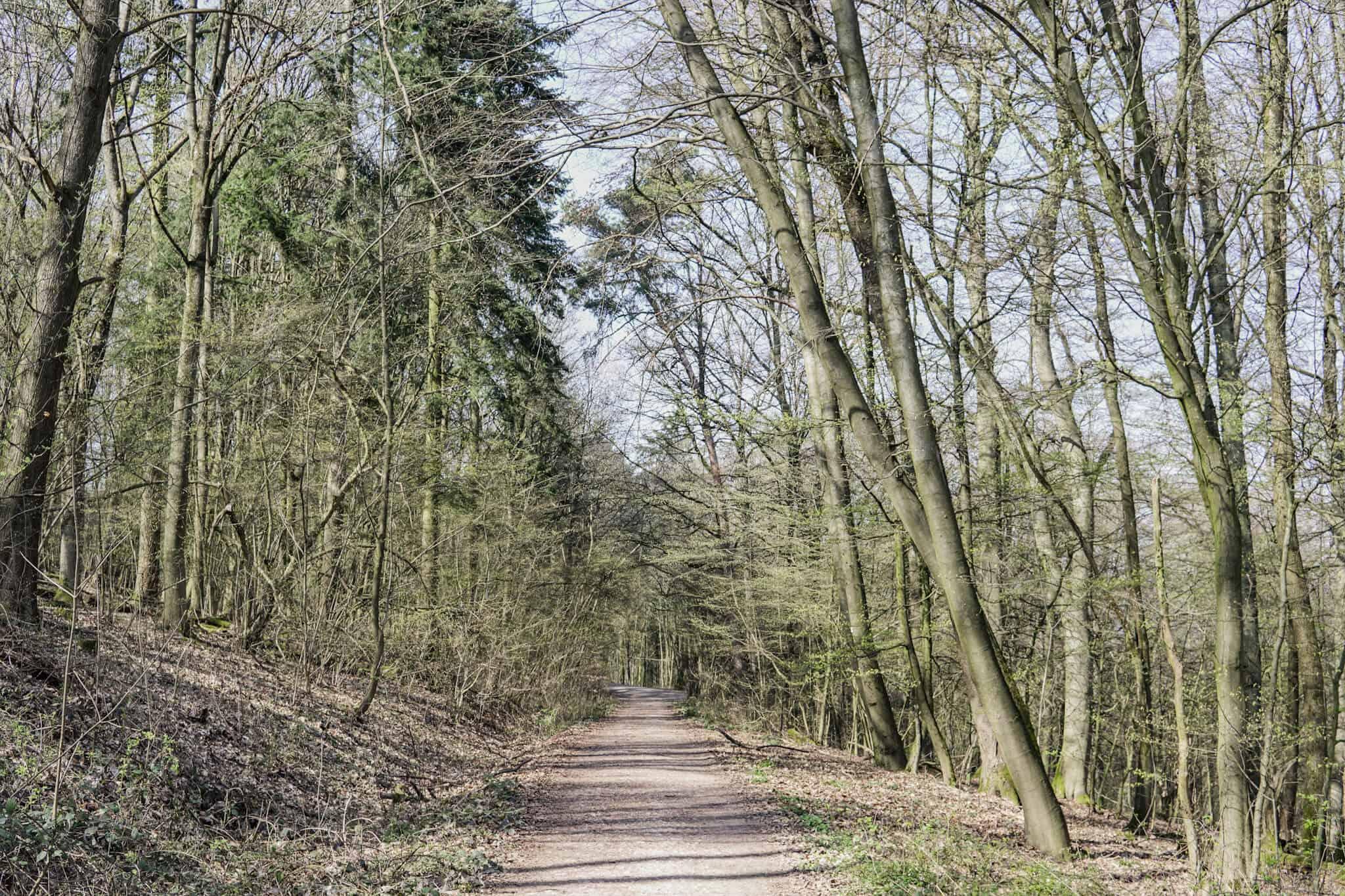 Von der Gundelhard zum Staufen