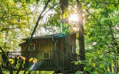 Im Baumhaushotel Wipfelglück – Eine Nacht auf Stelzen