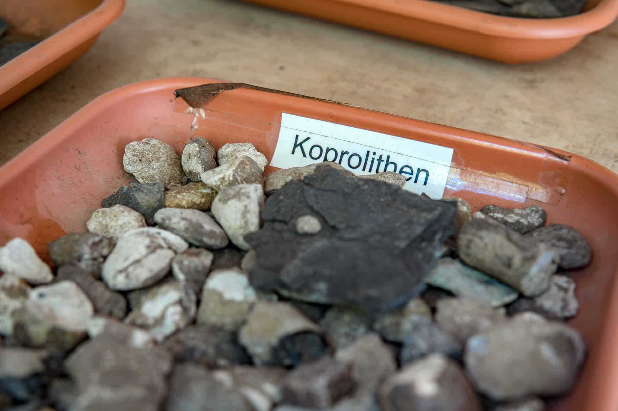 Fossilien in der Grube Messel 2