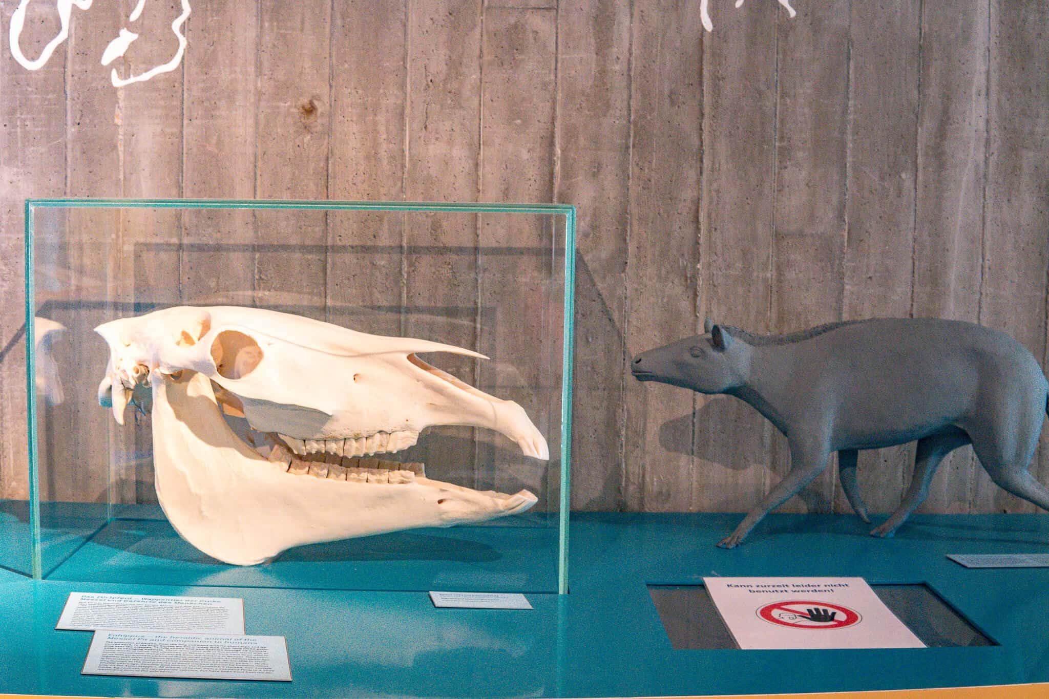 Kopf des Urpferdchens Grube Messel