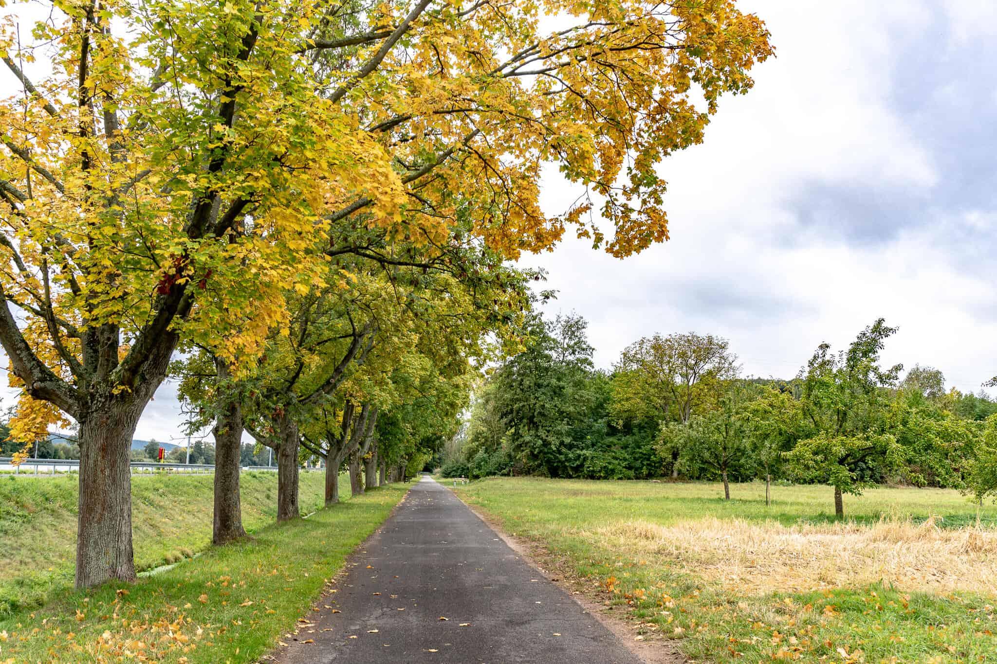 Herbst am MainRadweg