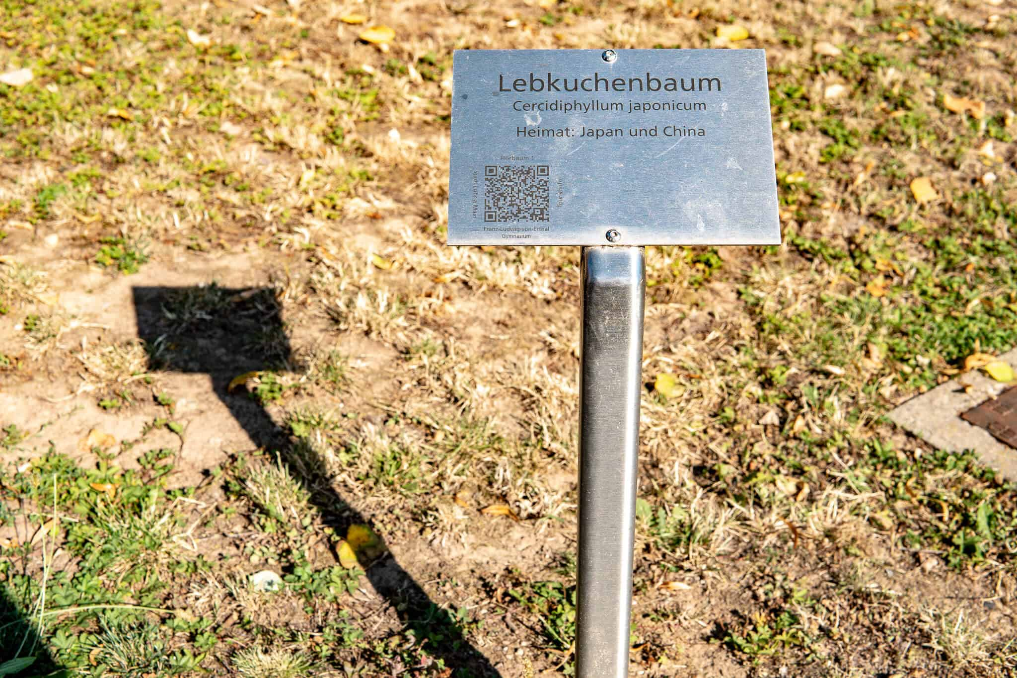 Hoerbaum Lohr am Main