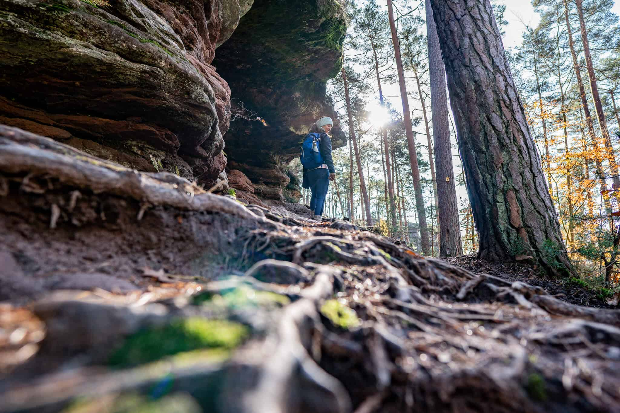 Barbara Dahner Felsenpfad Wald