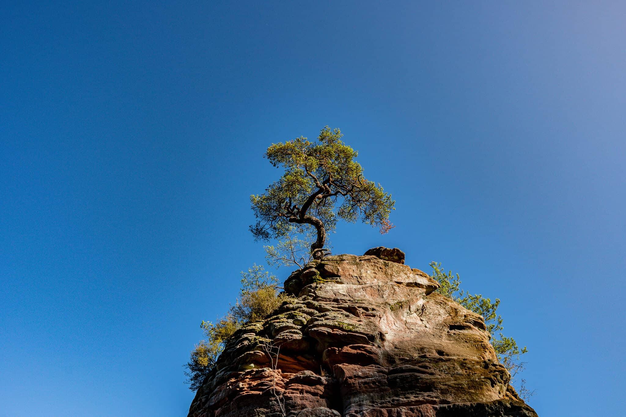 Baum auf Felsen