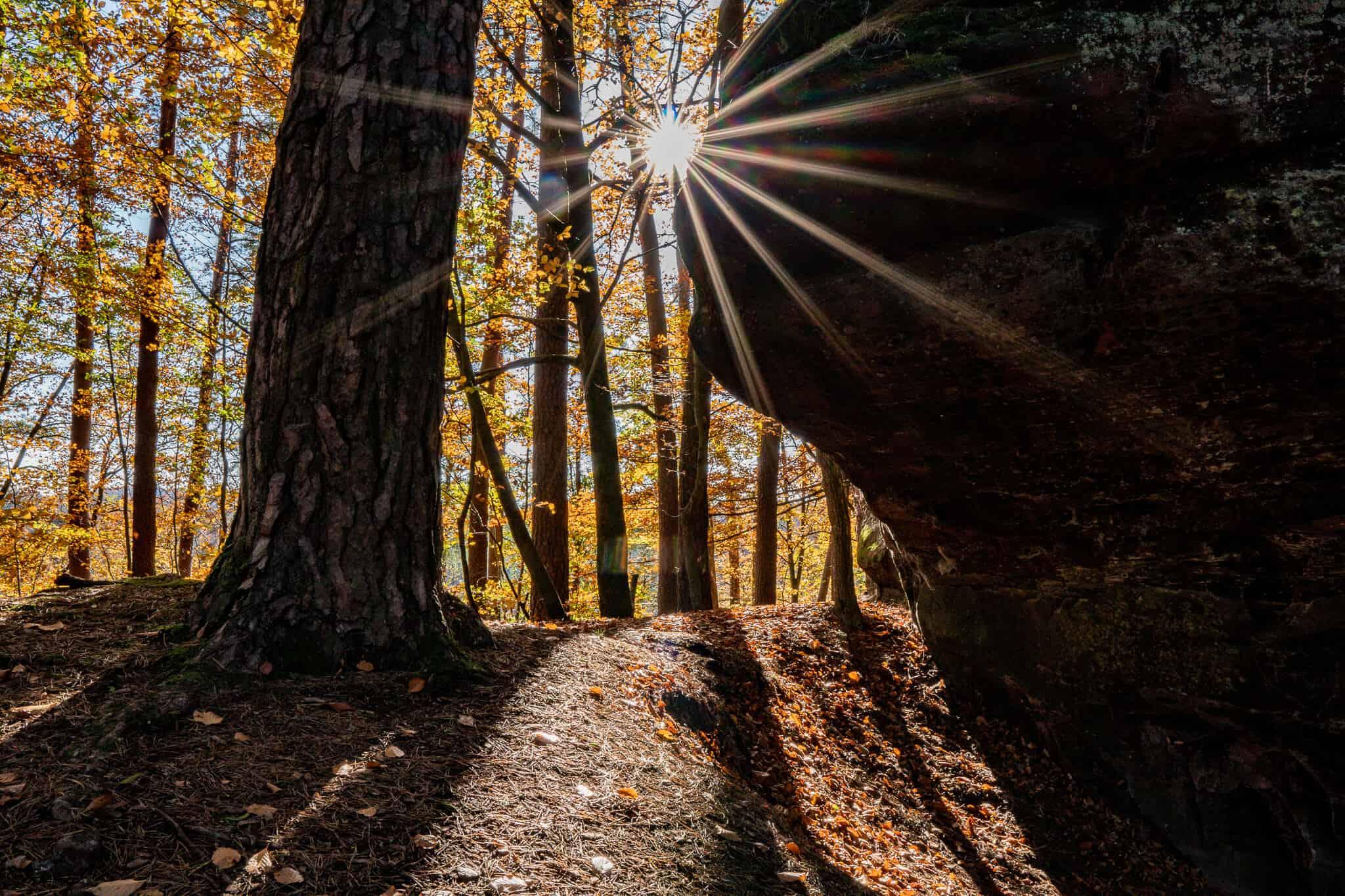 Dahner Felsenpfad Sonnenstern