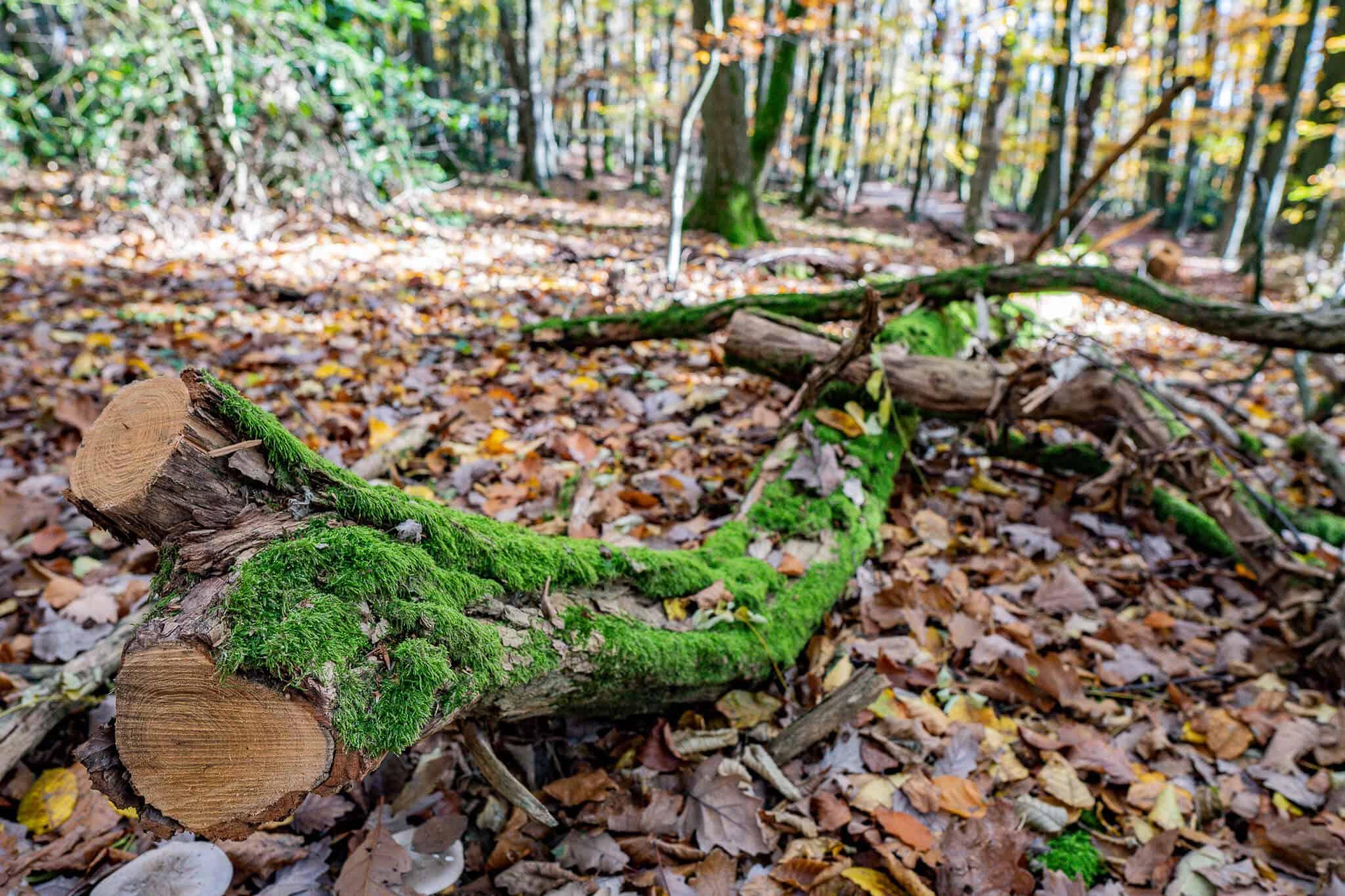 Im Koenigsteiner Wald