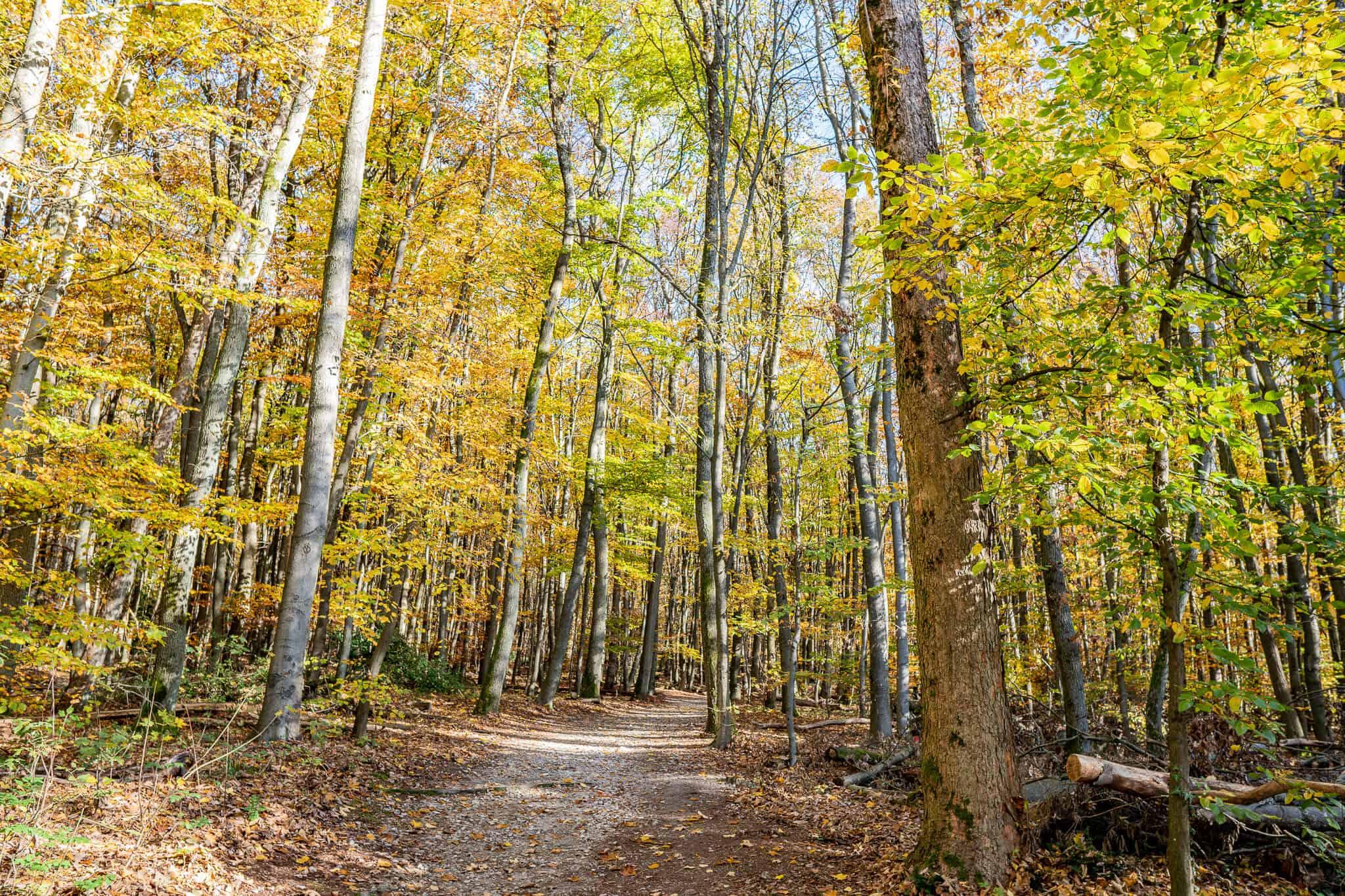 Koenigsteiner Wald