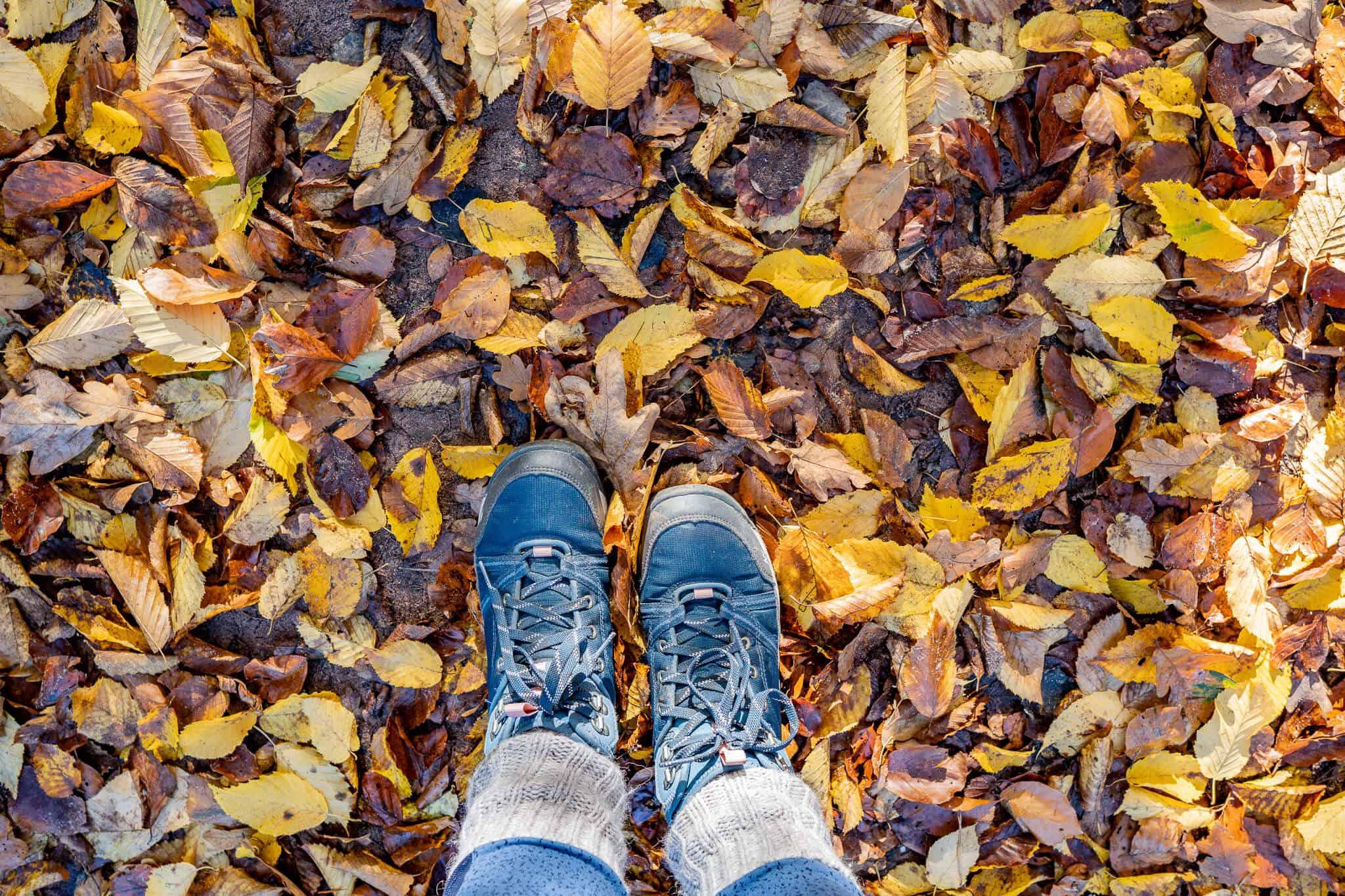 Schuhe im Laub