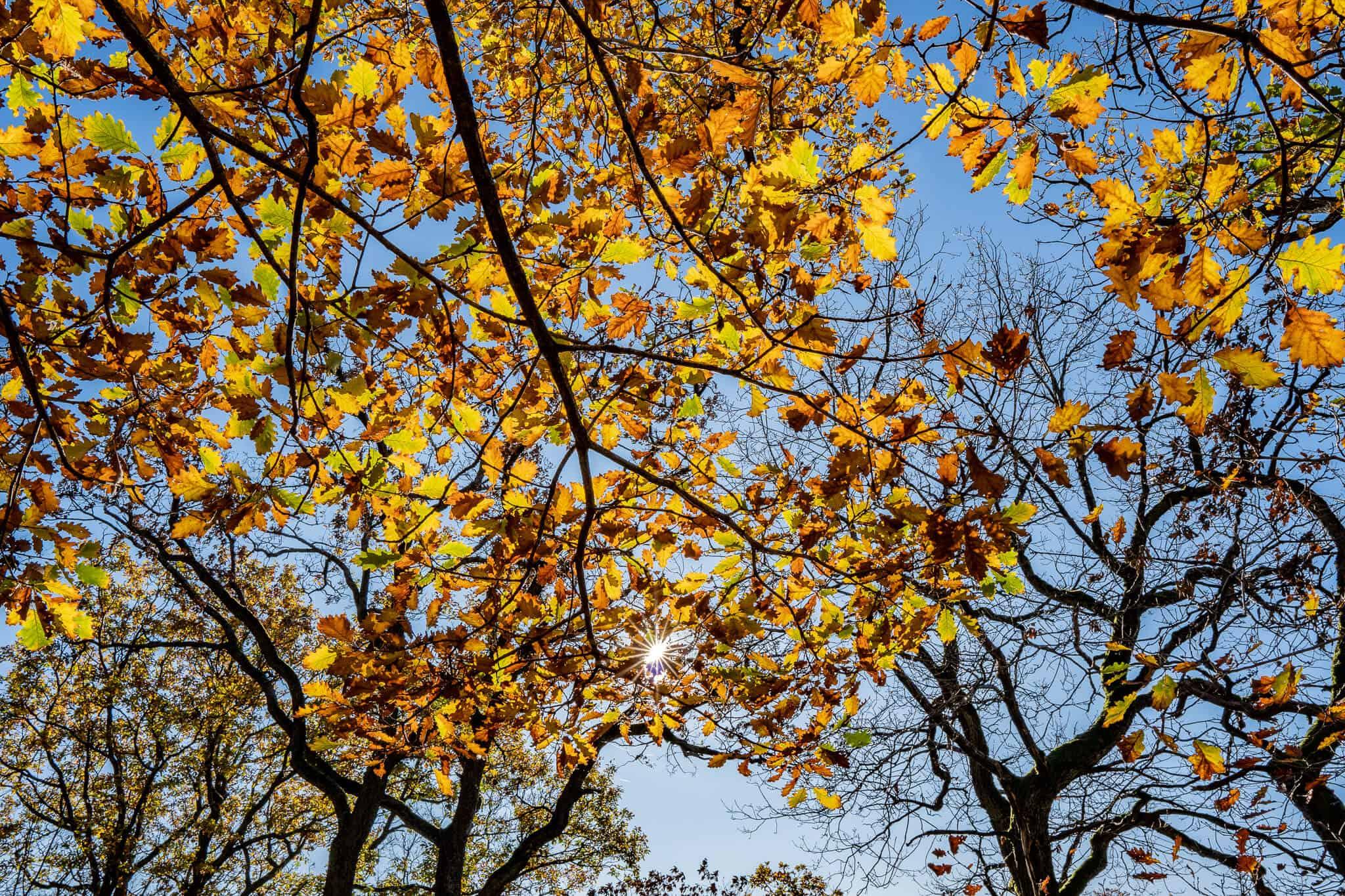 Sonnenstern zwischen Blättern