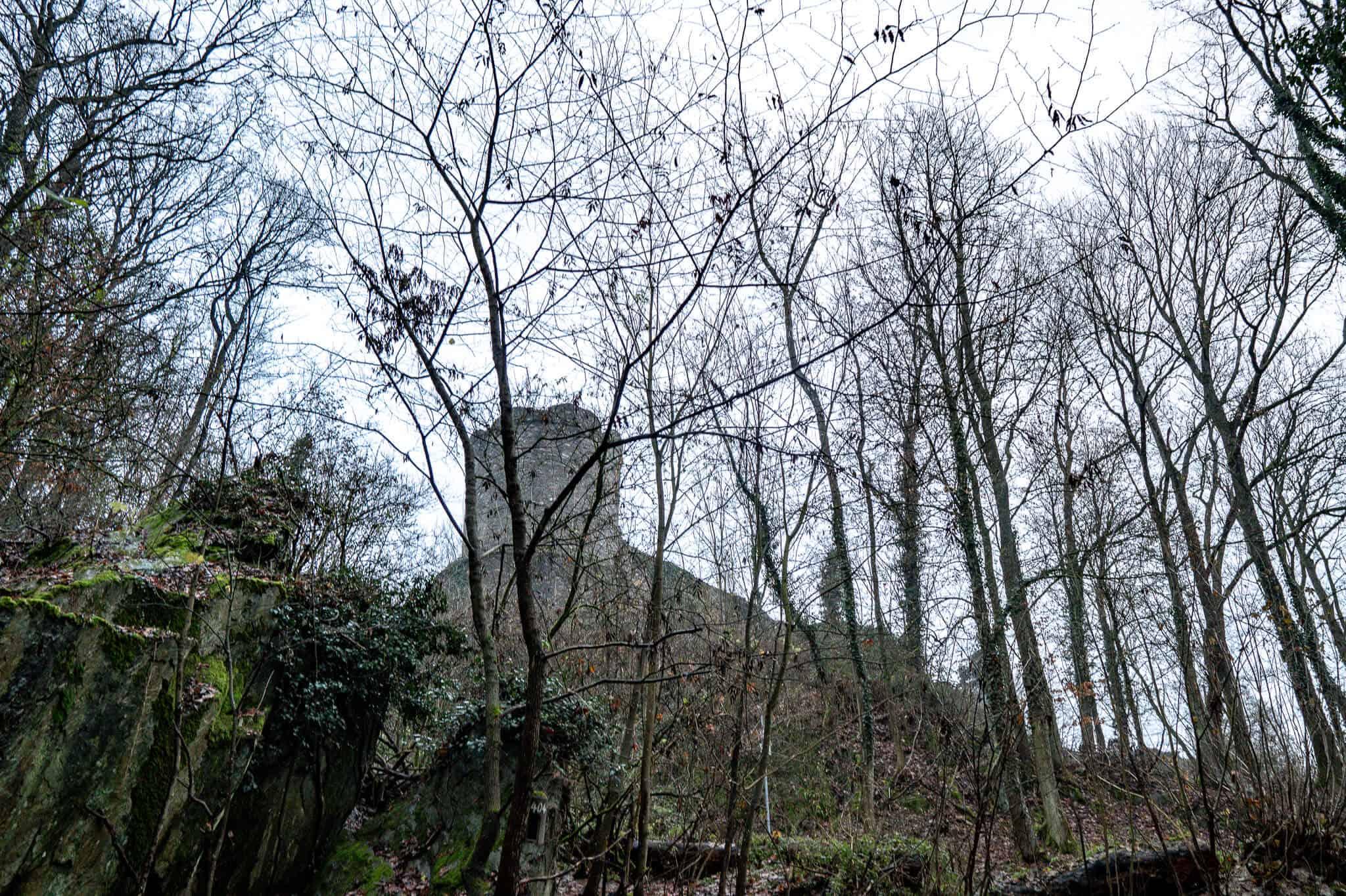 Königsteiner Burg im Wald
