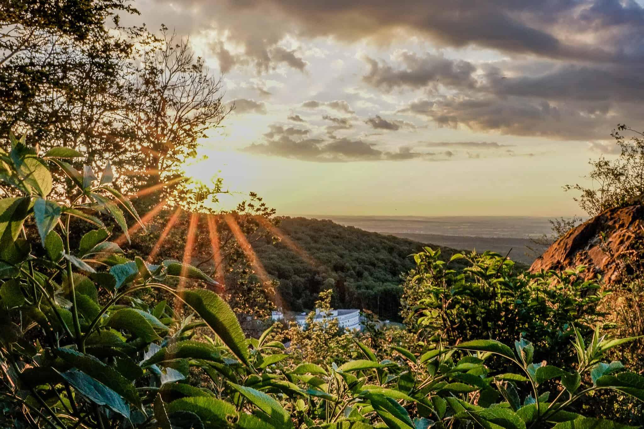 Sonnenaufgang durch die Blätter