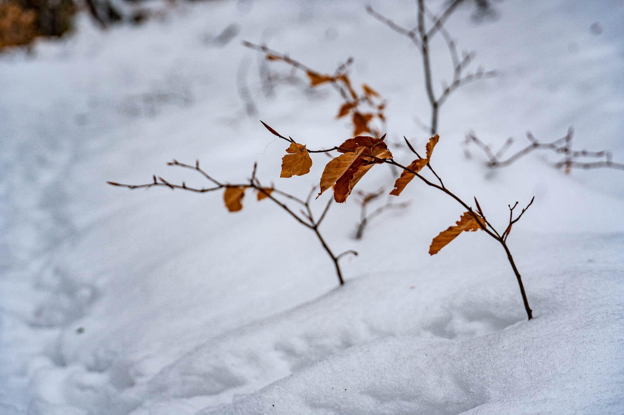 Ast im Schnee