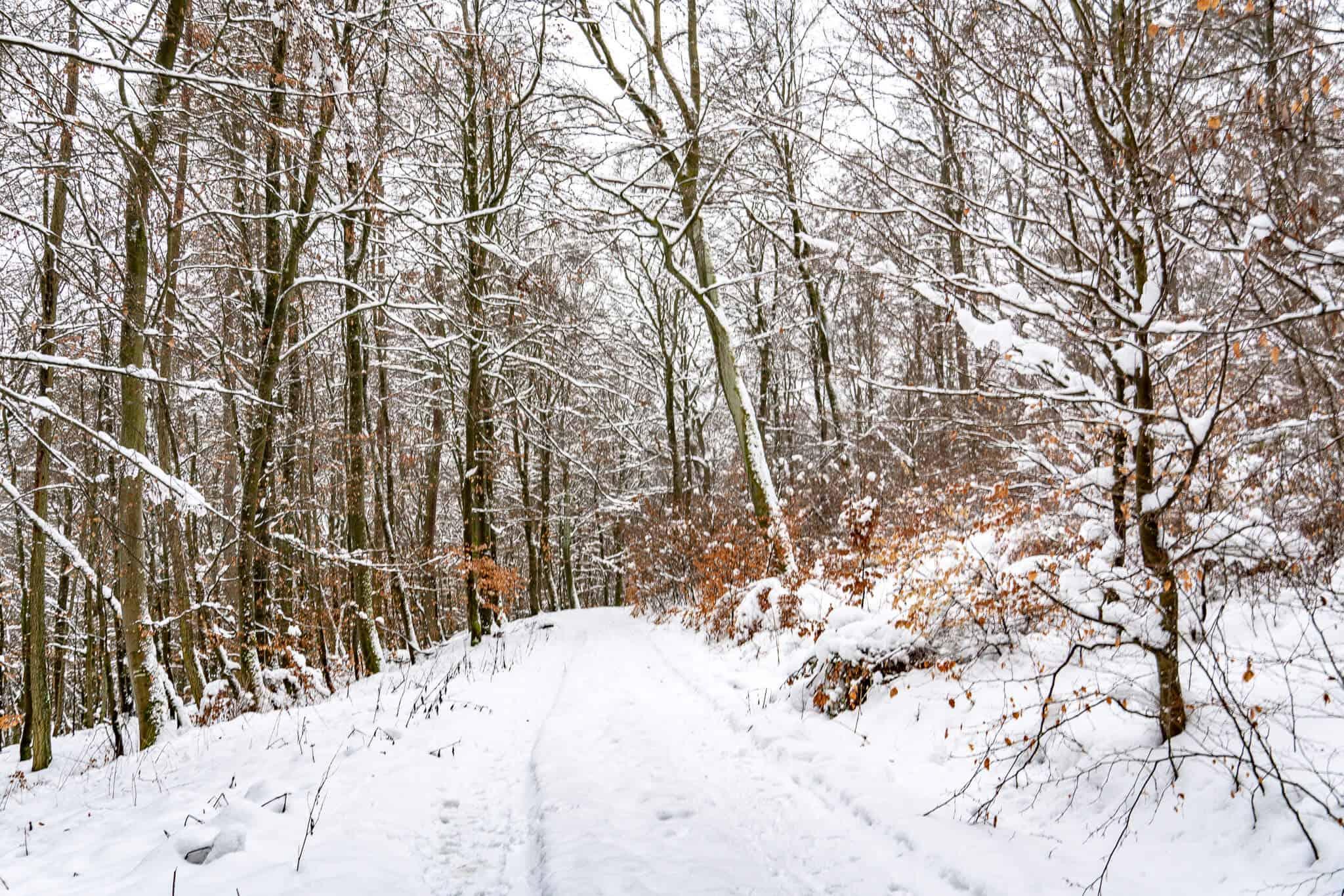 Feldberg Wanderweg