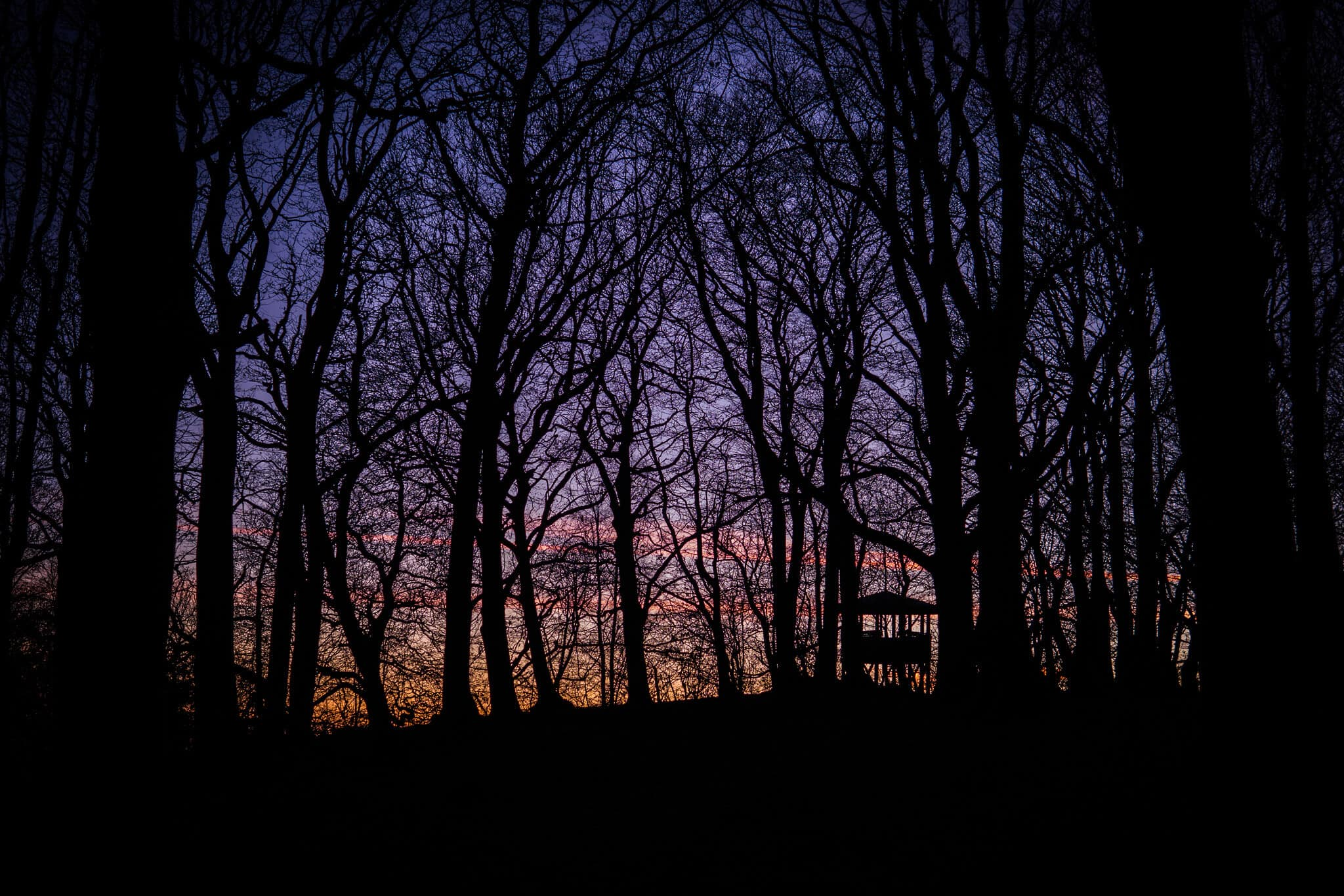 Lipstempel im Wald