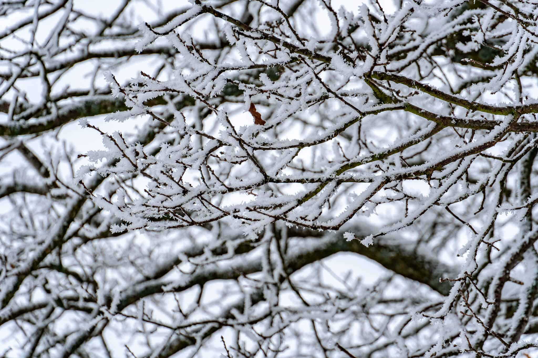 Schnee in den Zweigen