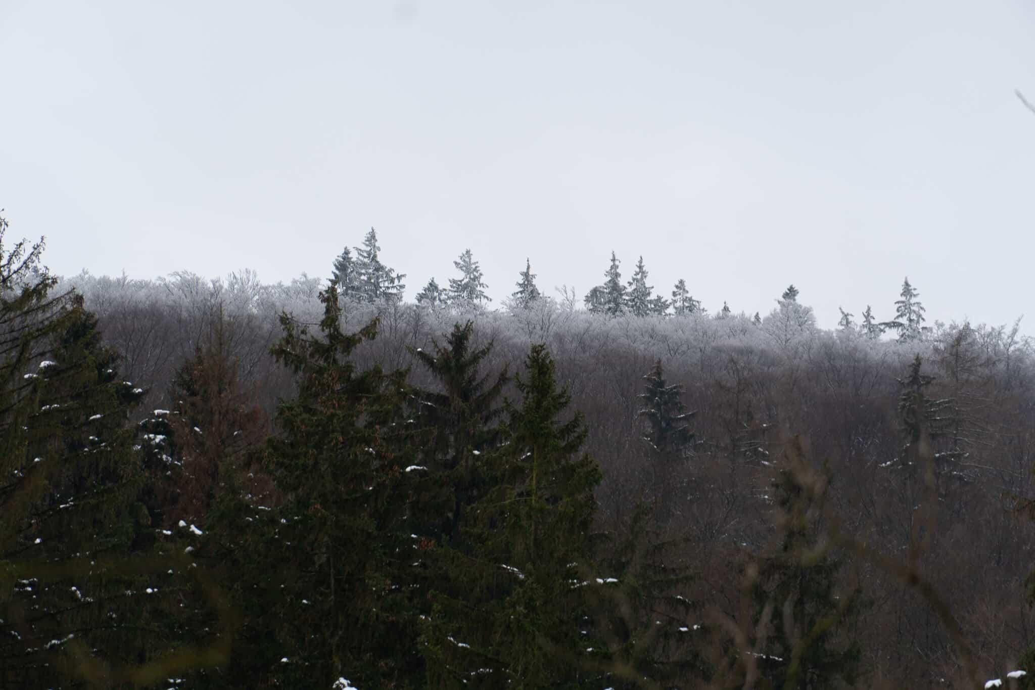Schneebedeckter Wald Feldberg